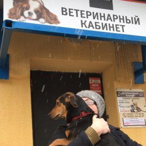 """""""Дорога домой"""" для бездомных животных"""