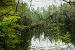 Зеленое чудо Могилева - Печерский лесопарк. Интервью с активистом  Михаил Копычко